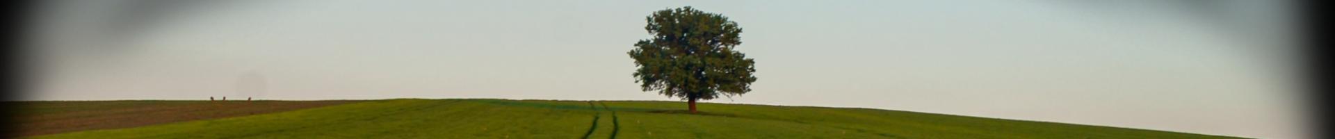 Catholic Climate Covenant - verdant view of tree